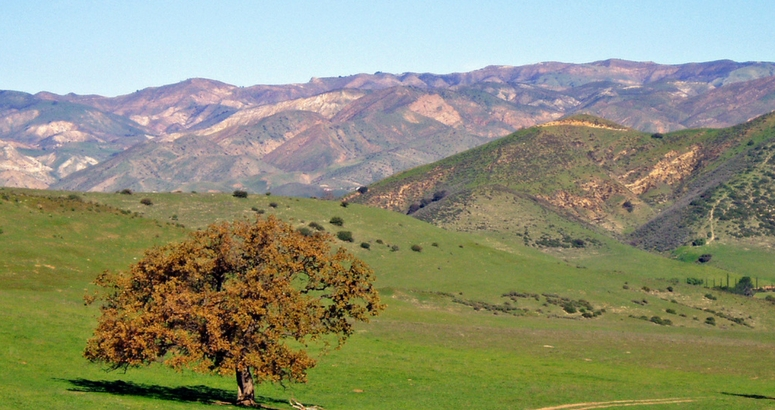 Image of pepper tree and rolling hills at the Brandeis Bardin campus in Simi Valley