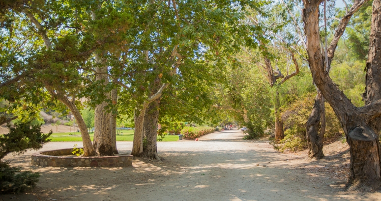 Image of trees at Brandeis-Bardin campus in Simi Valley, CA