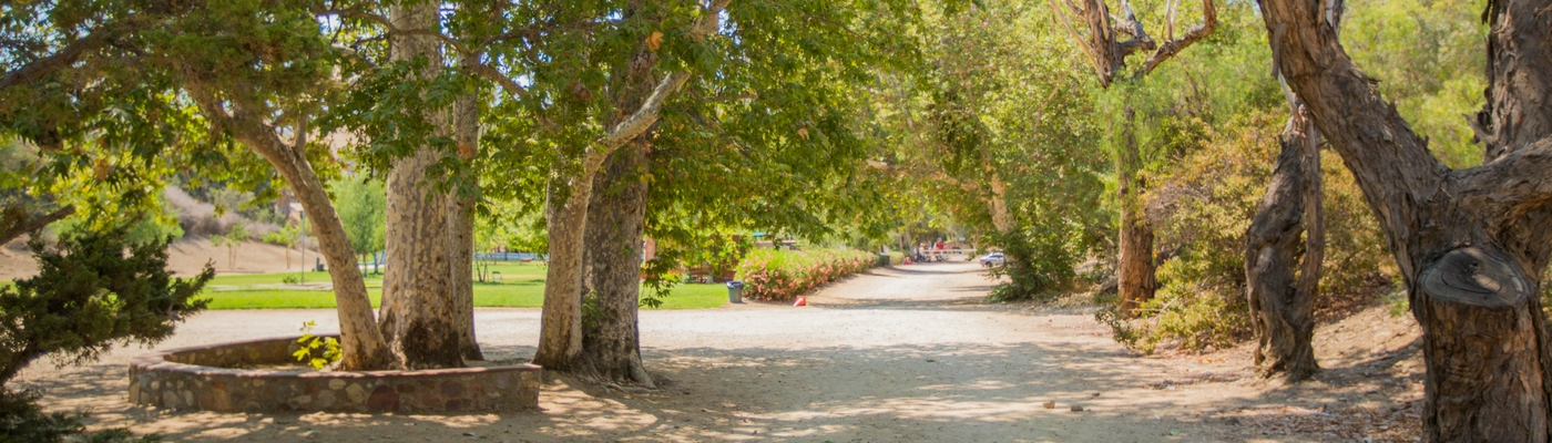 Image of trees and landscape of the Brandeis-Bardin campus in Simi Valley, California