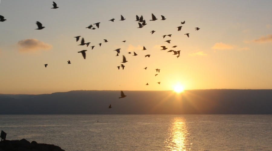 Photo of Ocean and Birds